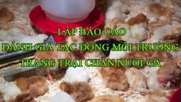 đánh giá tác động môi trường trang trại chăn nuôi gà