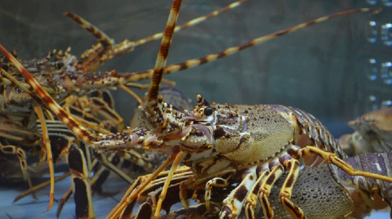 đánh giá tác động môi trường cơ sở nuôi trồng thủy sản